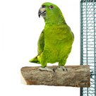 Back-Zoo-Nature-Wood-Slice-Perch-Large